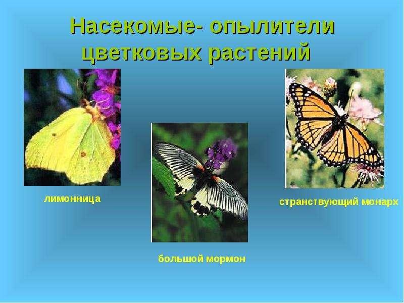 Насекомые- опылители цветковых растений