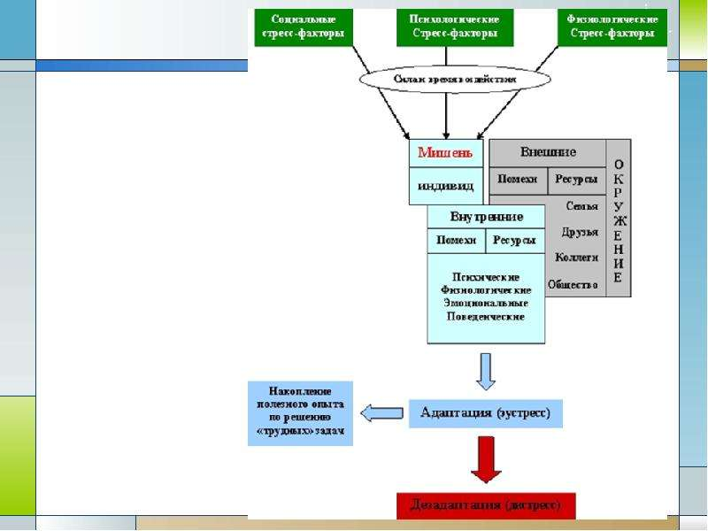 Стресс как негативный биосоциальный фактор Экология человека. Культура здоровья., слайд 13