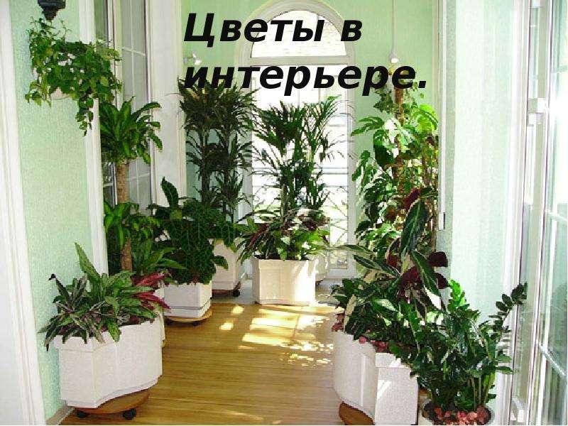 Цветы на балконе в ящиках и горшках, 18 фото композиций, сов.