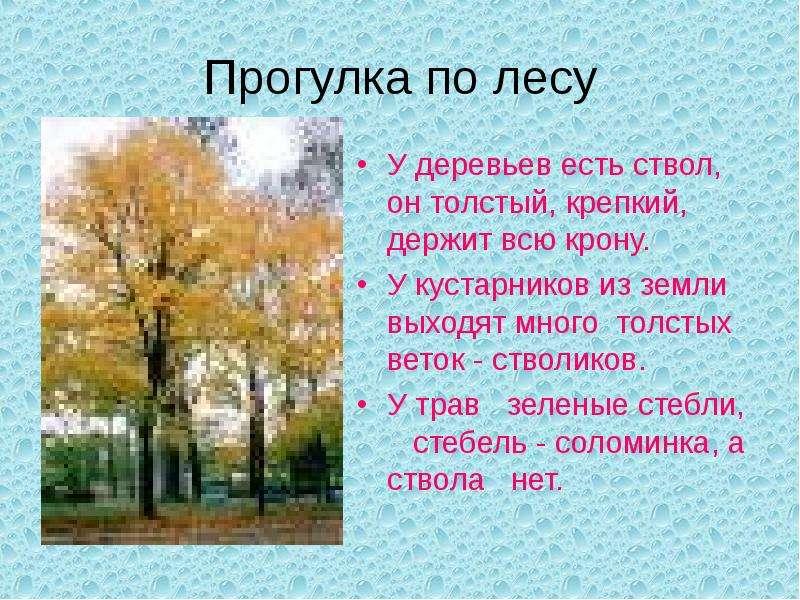 Прогулка по лесу У деревьев есть ствол, он толстый, крепкий, держит всю крону. У кустарников из земл