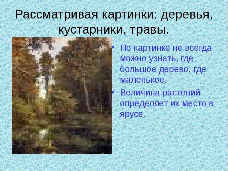 Рассматривая картинки: деревья, кустарники, травы. По картинке не всегда можно узнать, где большое д