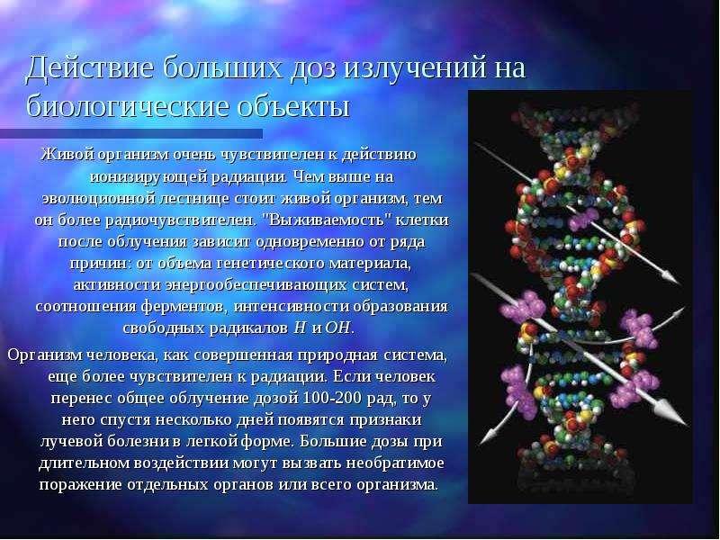 Действие больших доз излучений на биологические объекты Живой организм очень чувствителен к действию