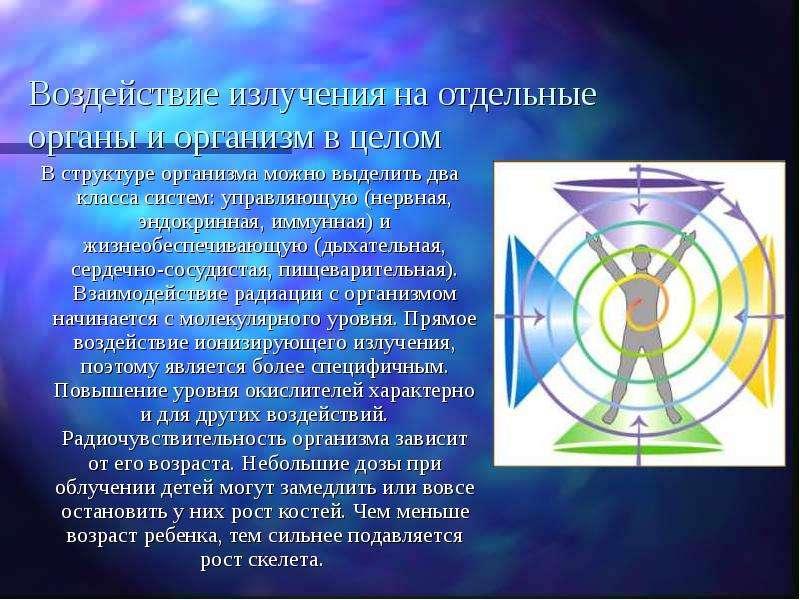 Воздействие излучения на отдельные органы и организм в целом В структуре организма можно выделить дв