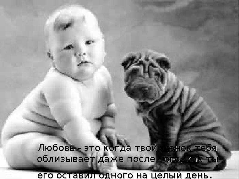 Любовь - это когда твой щенок тебя облизывает даже после того, как ты его оставил одного на целый де