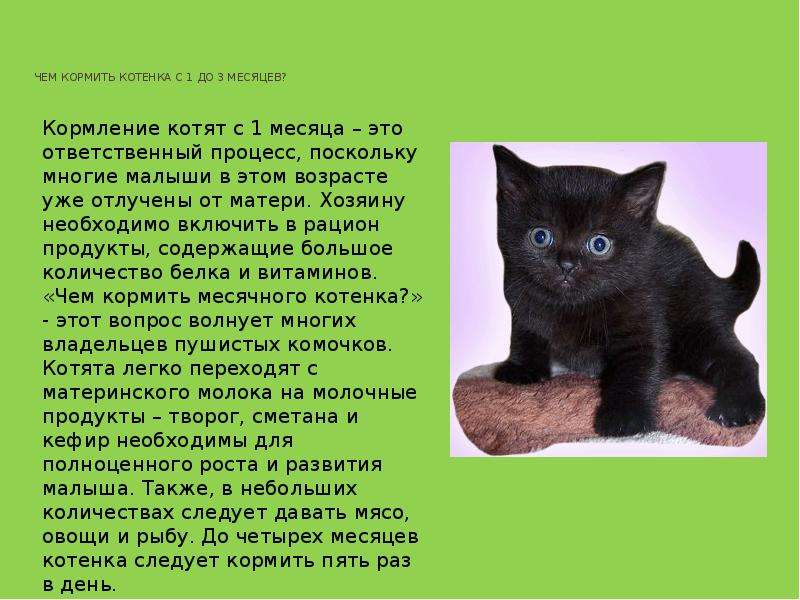 как кормить двухмесячного котенка