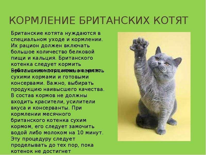 Корма для кошек: виды, классы, отзывы ветеринаров Сайт «Мурло»