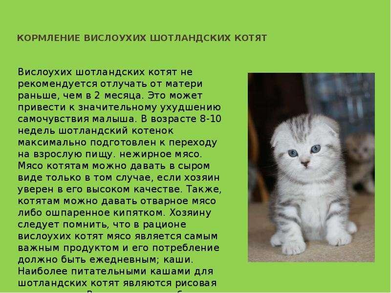 Понос у кошек и котят кошка + кот = котенок