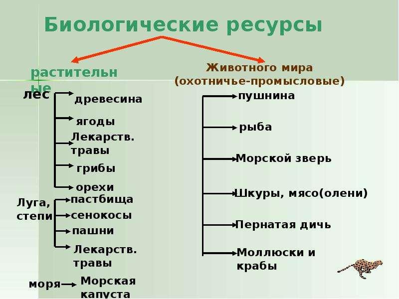 Index of /img/baza3/konspekt-lekcij-po-ekologiifiles