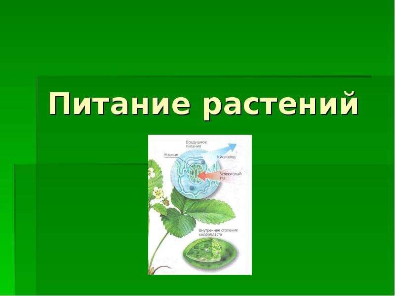 Презентацию на тему питание