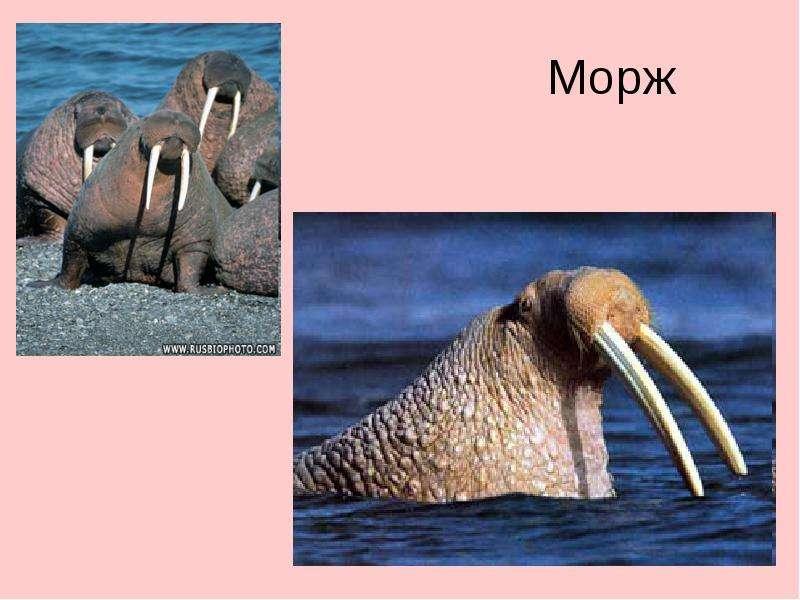 Растения и животные побережья черного моря описание