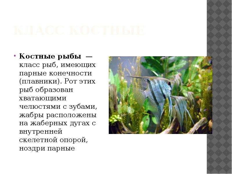 Биология рыбы презентация