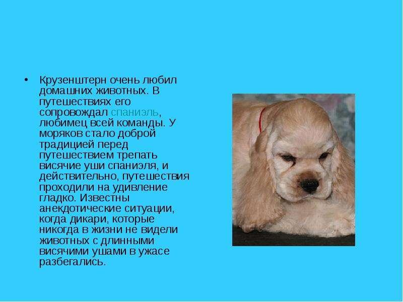 Крузенштерн очень любил домашних животных. В путешествиях его сопровождал спаниэль, любимец всей ком