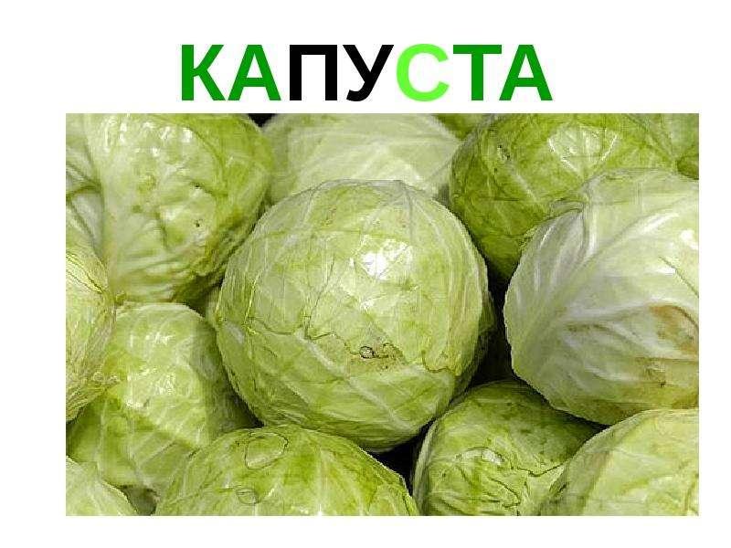КАПУСТА