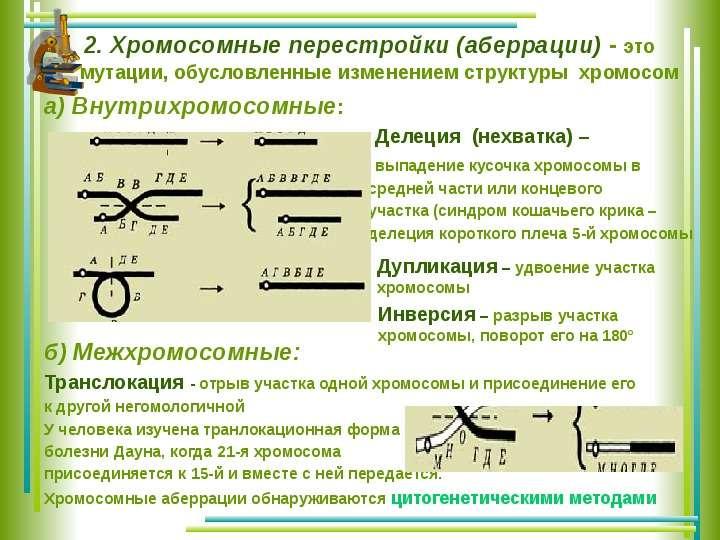 Хромосомные перестройки картинки