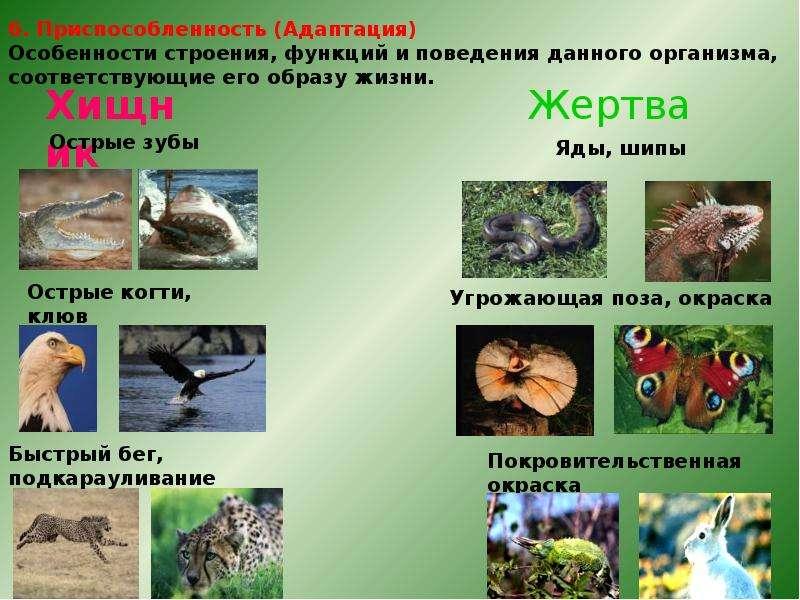 Биология наука о живом мире, слайд 16