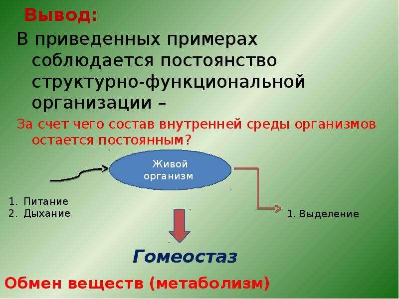 Вывод: В приведенных примерах соблюдается постоянство структурно-функциональной организации – За сче