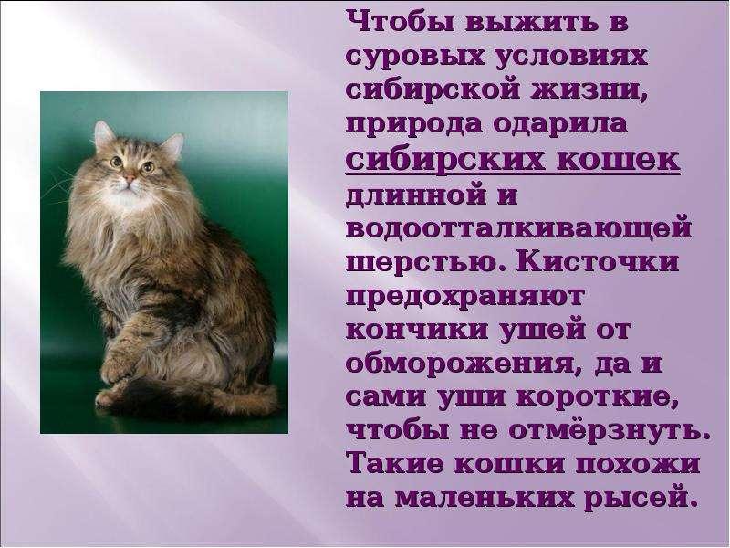Презентация Почему мы любим кошек и собак? - скачать презентацию
