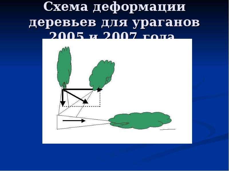 Схема деформации деревьев для ураганов 2005 и 2007 года.
