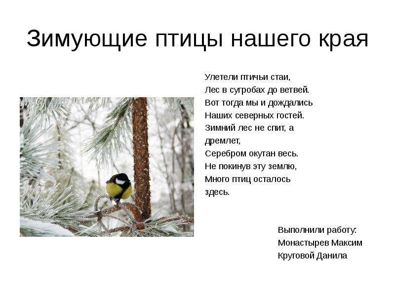 Презентация Зимующие птицы нашего края Улетели птичьи стаи, Лес в сугробах до ветвей. Вот тогда мы и дождались Наших северных гостей. Зимний