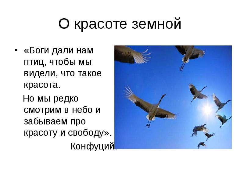 О красоте земной «Боги дали нам птиц, чтобы мы видели, что такое красота. Но мы редко смотрим в небо