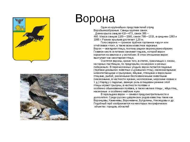 Ворона Один из крупнейших представителей отряд Воробьинообразные. Свмцы крупнее самок. . Длина крыла