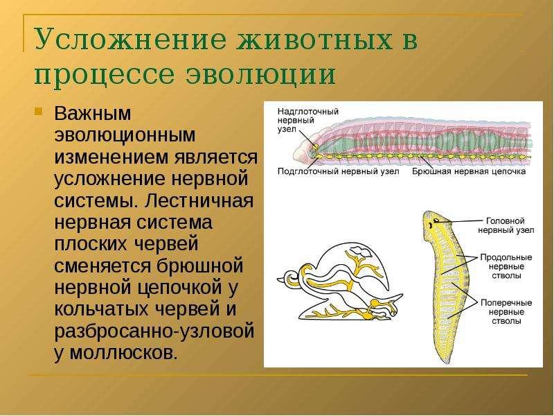 Многообразие отношений между видами и происхождение паразитизма