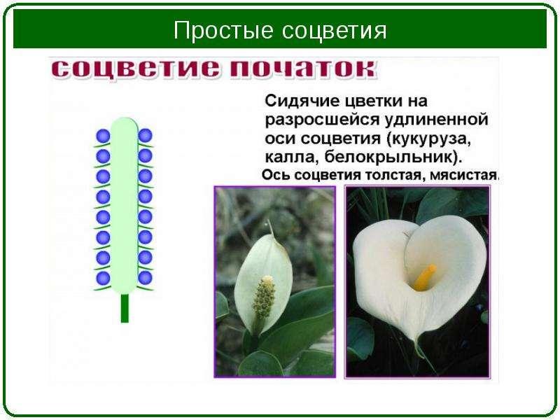 Урок окружающего мира на тему: весеннее пробуждение растений
