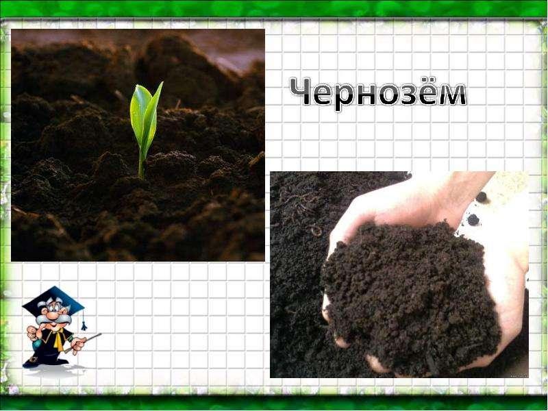 солнечный почва охрана почвы картинки одета стильные укороченные