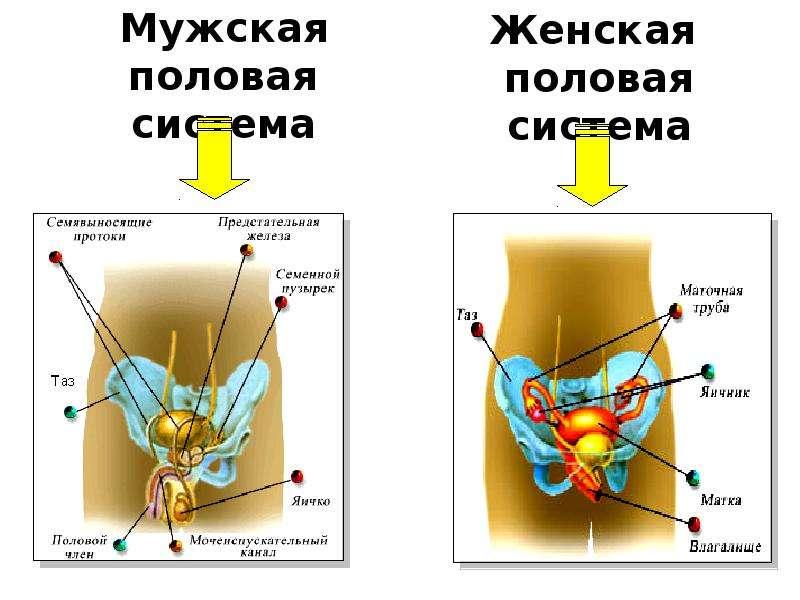 audioknigi-erotika-narod-ru