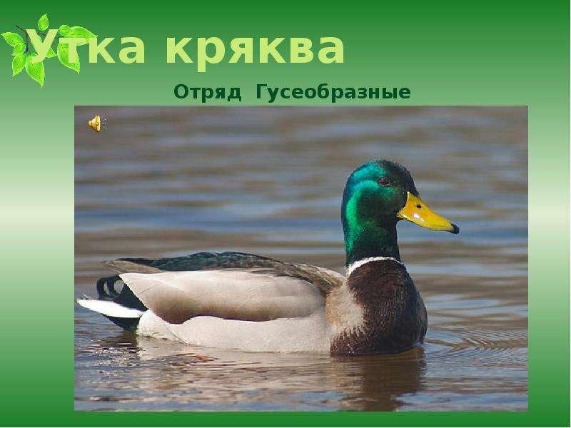 к чему снится дикая утка в руках это самый простой