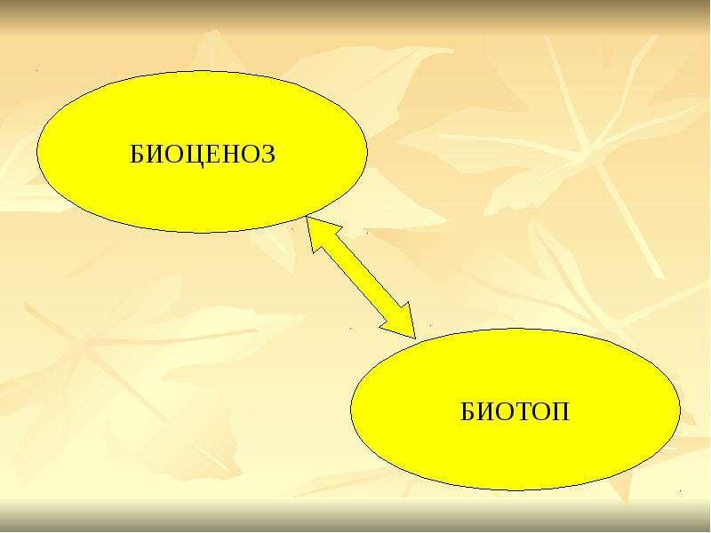 БИОГЕОЦЕНОЗ КАК ОСОБЫЙ УРОВЕНЬ ОРГАНИЗАЦИИ ЖИЗНИ, слайд 11