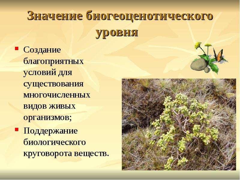 Значение биогеоценотического уровня Создание благоприятных условий для существования многочисленных