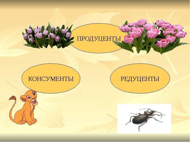 БИОГЕОЦЕНОЗ КАК ОСОБЫЙ УРОВЕНЬ ОРГАНИЗАЦИИ ЖИЗНИ, слайд 6