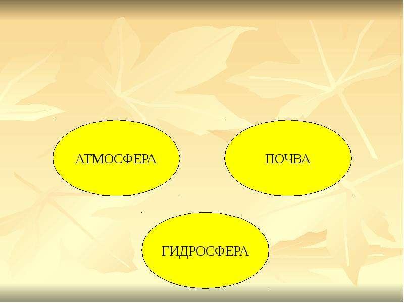 БИОГЕОЦЕНОЗ КАК ОСОБЫЙ УРОВЕНЬ ОРГАНИЗАЦИИ ЖИЗНИ, слайд 8