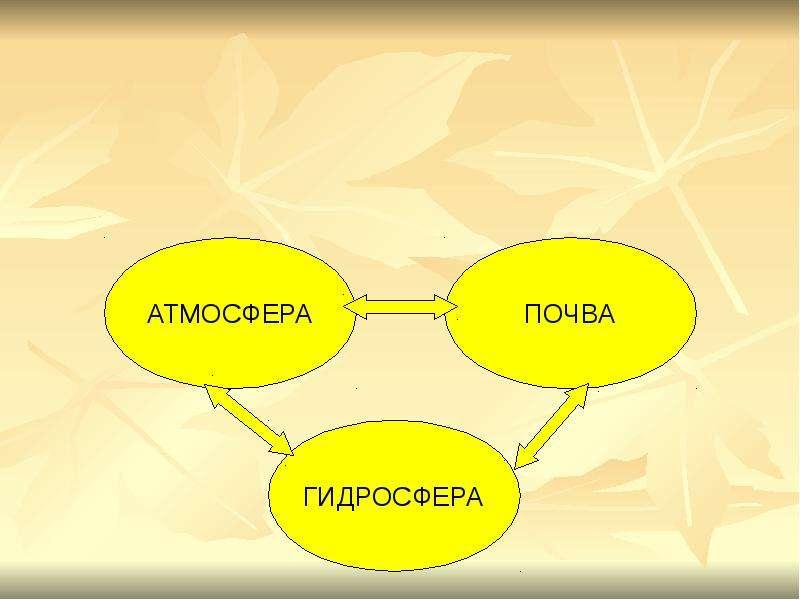 БИОГЕОЦЕНОЗ КАК ОСОБЫЙ УРОВЕНЬ ОРГАНИЗАЦИИ ЖИЗНИ, слайд 9