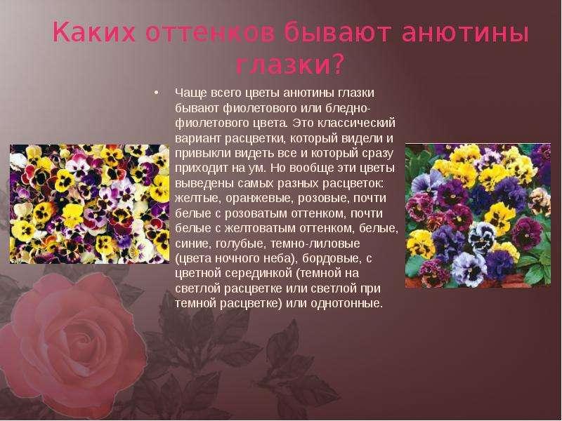 Стихи картинки о разных цветах