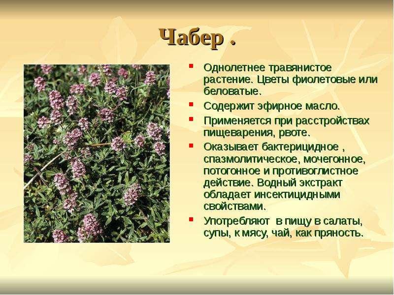 Лечебные травы с фиолетовыми цветами