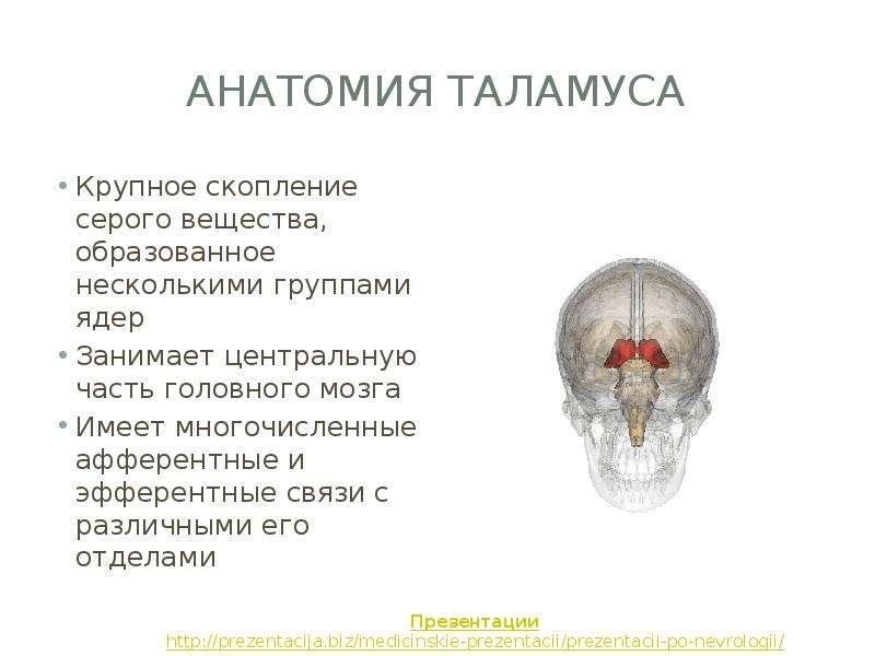 Таламус
