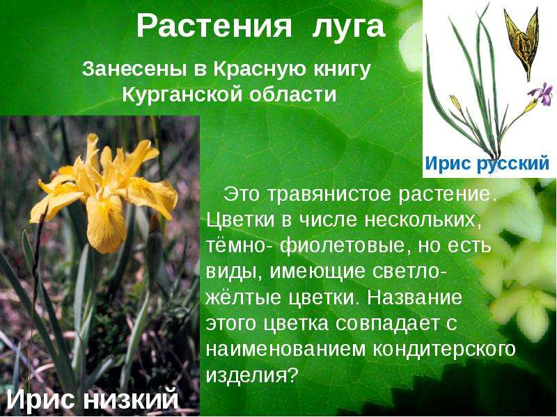 Красная книга россии цветов