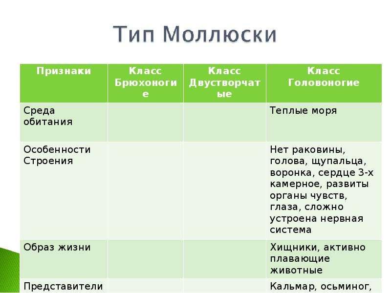 КЛАСС ГОЛОВОНОГИЕ МОЛЛЮСКИ. ИХ ЗНАЧЕНИЕ В ПРИРОДЕ И ЖИЗНИ ЧЕЛОВЕКА, слайд 11