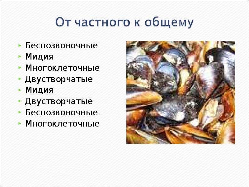 КЛАСС ГОЛОВОНОГИЕ МОЛЛЮСКИ. ИХ ЗНАЧЕНИЕ В ПРИРОДЕ И ЖИЗНИ ЧЕЛОВЕКА, слайд 15