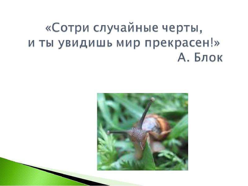 КЛАСС ГОЛОВОНОГИЕ МОЛЛЮСКИ. ИХ ЗНАЧЕНИЕ В ПРИРОДЕ И ЖИЗНИ ЧЕЛОВЕКА, слайд 3