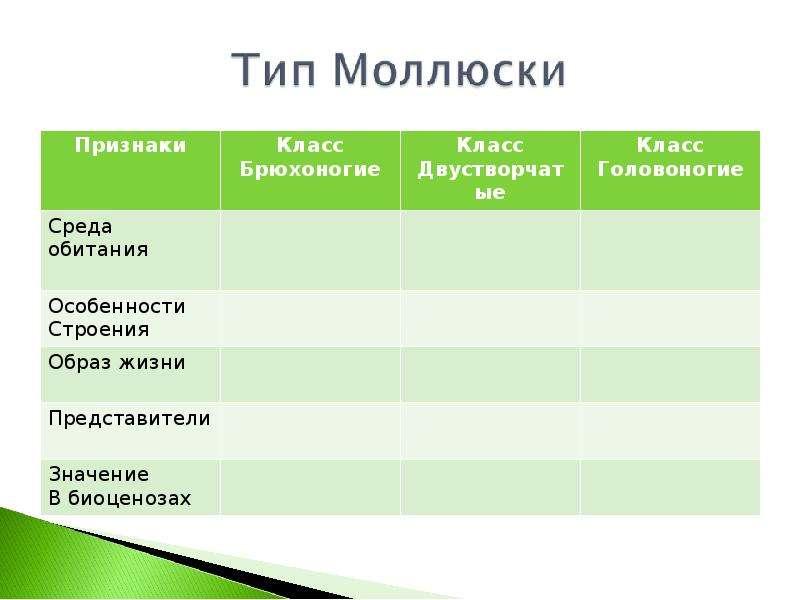 КЛАСС ГОЛОВОНОГИЕ МОЛЛЮСКИ. ИХ ЗНАЧЕНИЕ В ПРИРОДЕ И ЖИЗНИ ЧЕЛОВЕКА, слайд 5