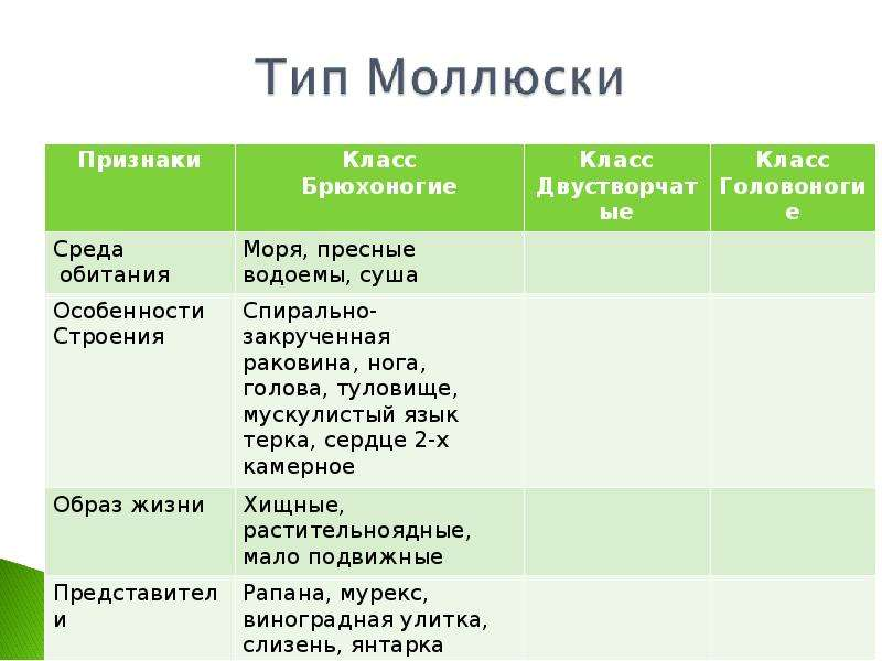КЛАСС ГОЛОВОНОГИЕ МОЛЛЮСКИ. ИХ ЗНАЧЕНИЕ В ПРИРОДЕ И ЖИЗНИ ЧЕЛОВЕКА, слайд 7