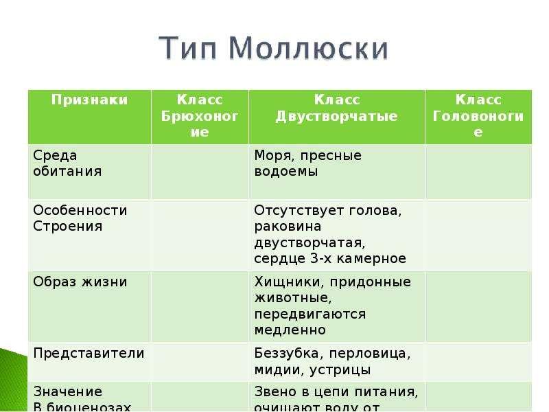 КЛАСС ГОЛОВОНОГИЕ МОЛЛЮСКИ. ИХ ЗНАЧЕНИЕ В ПРИРОДЕ И ЖИЗНИ ЧЕЛОВЕКА, слайд 8