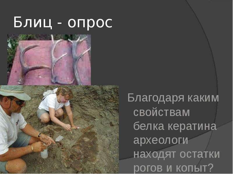 Блиц - опрос Благодаря каким свойствам белка кератина археологи находят остатки рогов и копыт?