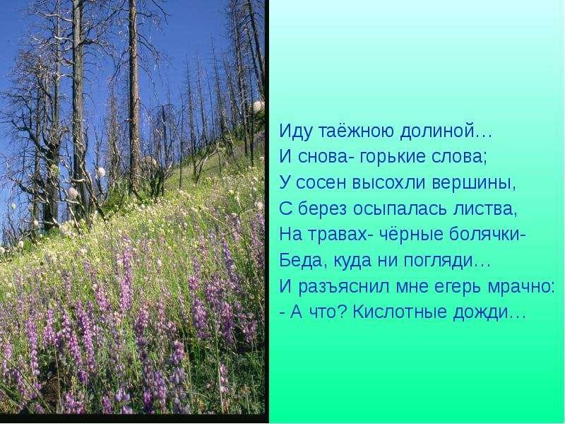 Иду таёжною долиной… И снова- горькие слова; У сосен высохли вершины, С берез осыпалась листва, На т
