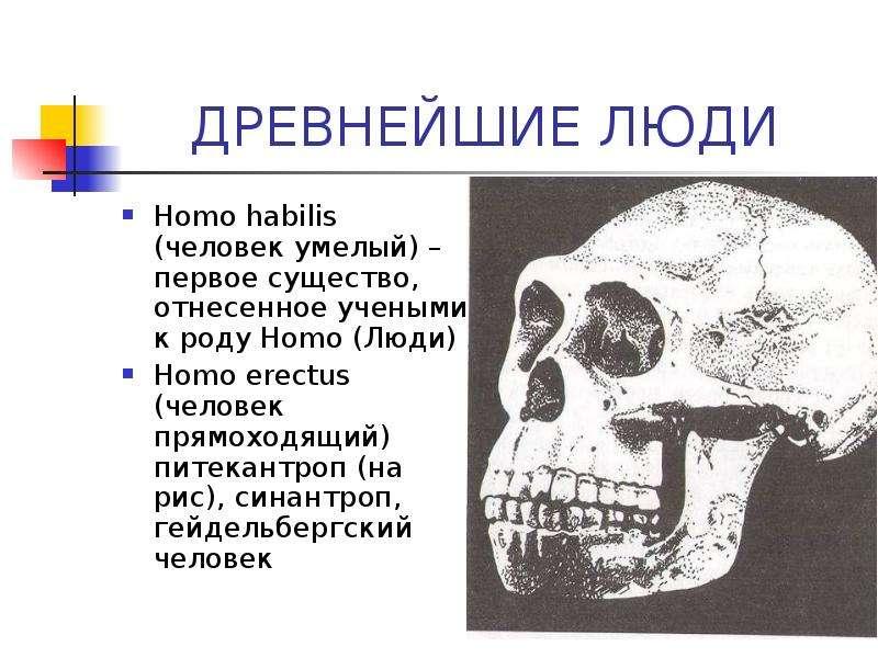 Человек умелый: хабилис человек разумный