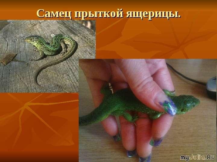 Чем можно кормить ящерицу в домашних условиях 612