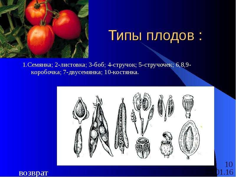 Типы плодов : 1. Семянка; 2-листовка; 3-боб; 4-стручок; 5-стручочек; 6,8,9-коробочка; 7-двусемянка;